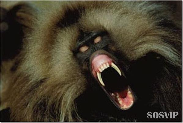Animais estranhos criaturas awful-creatures.jpg (7)