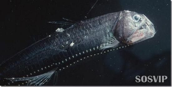 Peixes estranhos esqusitos.jpg (3)