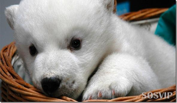 Animals baby - Bebes animais.jpg (28)