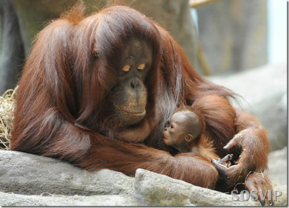 Animals baby - Bebes animais.jpg (34)