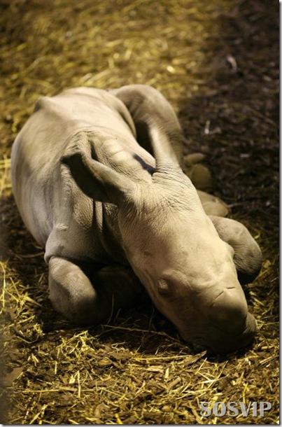 Animals baby - Bebes animais.jpg (30)