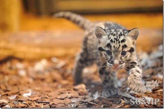 Animals baby - Bebes animais.jpg (14)