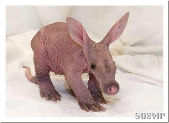 Animals baby - Bebes animais.jpg (8)