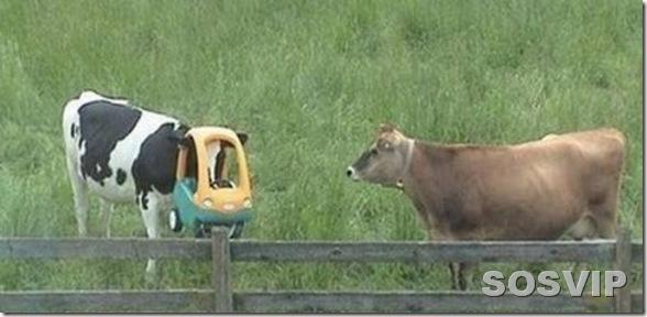 funny animals engracados animais.jpg (12)