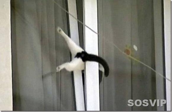 funny animals engracados animais.jpg (15)