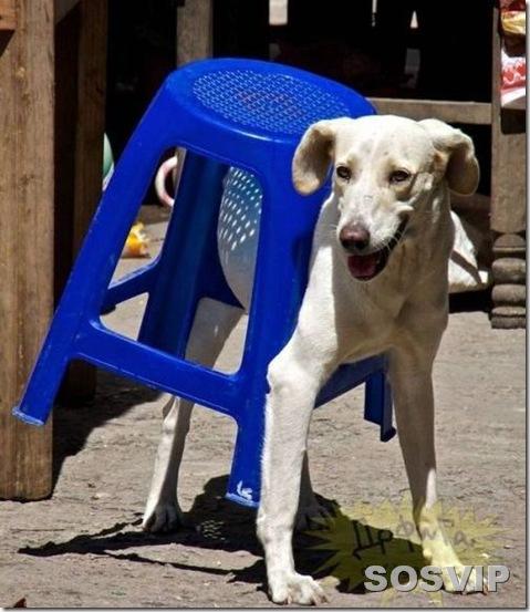 funny animals engracados animais.jpg (5)