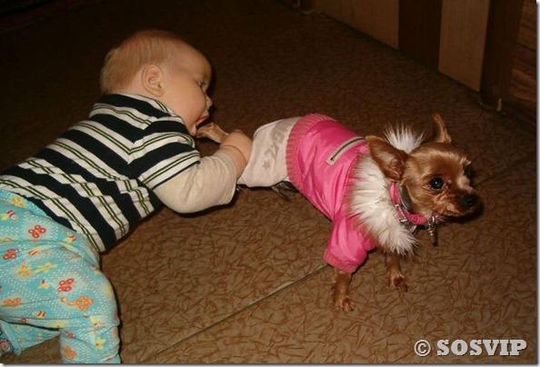 Cachorro babá a melhor babá babysitter (8)