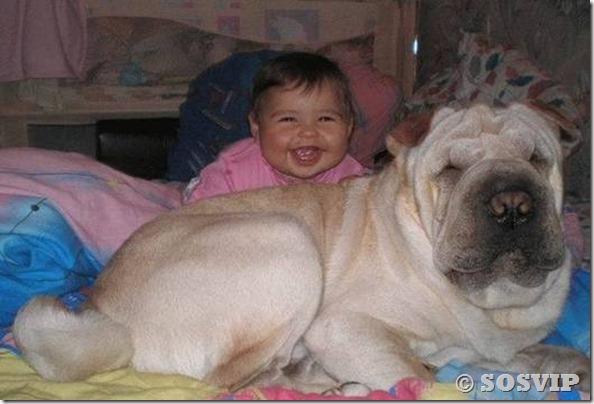 Cachorro babá a melhor babá babysitter (10)