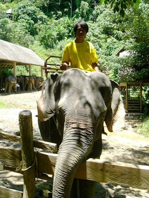 Have You Ever Ride An Elephant Before? picture phuket escapade  photo