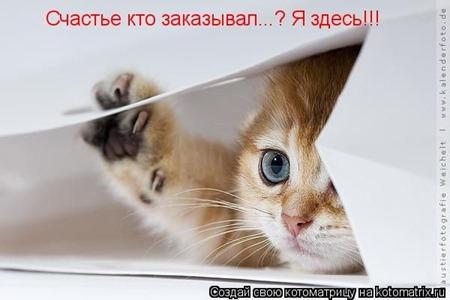 Котенок - счастье