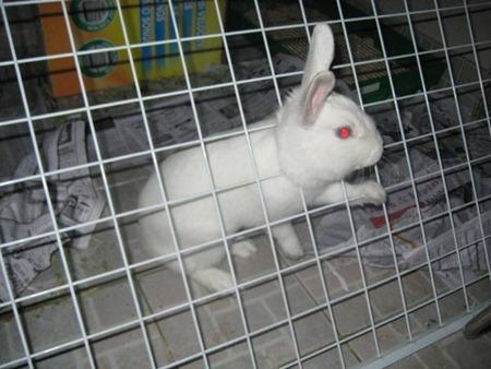 Кролик, как же это произошло?