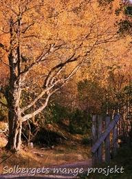 hyttetur i skogen 136