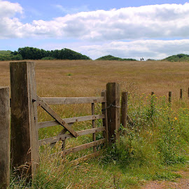 Fence view at Orcombe Point by Wendy Richards - Landscapes Prairies, Meadows & Fields ( fence, orcombe point, meadow, exmouth, gate )
