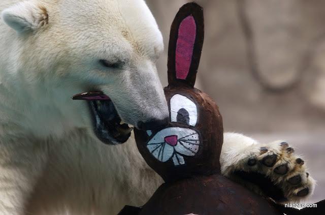 2009复活节 动物园也有兔子