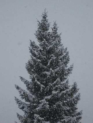 jul og nyttår 046