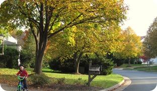 fall days 043