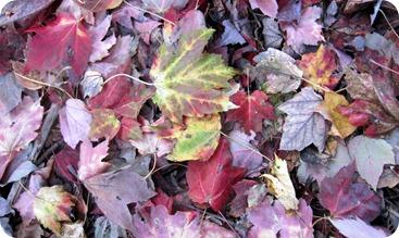 fall days 062