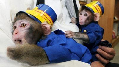 monkey_station_masters_pa[1]