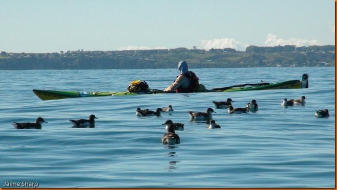 kayakdownundernzleg1-03485