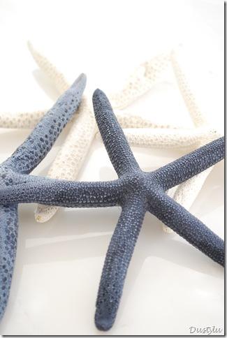 shells blue 048
