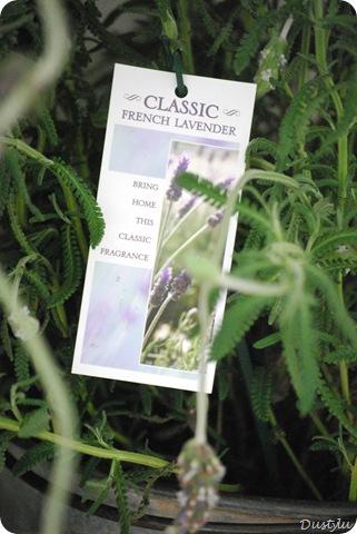 Lavender 2 192