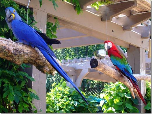 Zoo 072