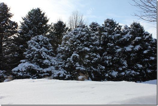 Winter 043