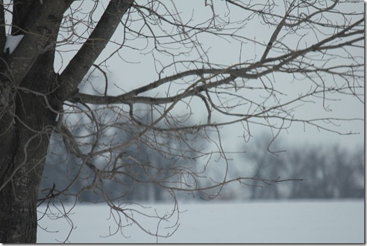 Winter 065