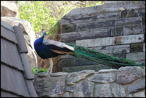 Zoo3-553_thumb_thumb