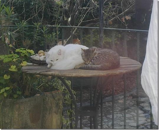 mishima dormint al terrat