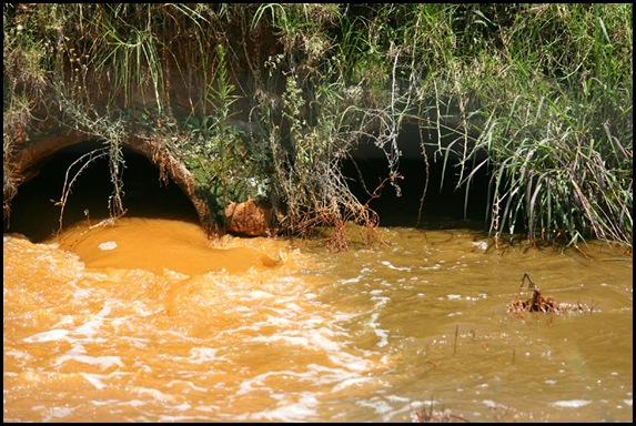 Acid Polluted Hippo Dam in Krugersdorp Game Reserve