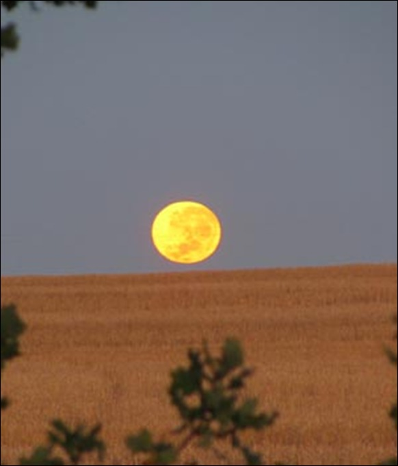full moon over Wellington wheat farm Feb172011 by farmwife Christa Steyn