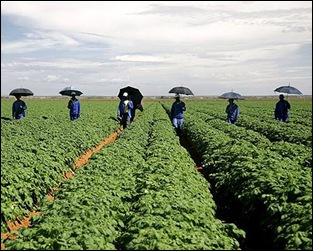 South African potato farm training workers