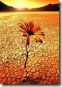 flor_en_el_desierto