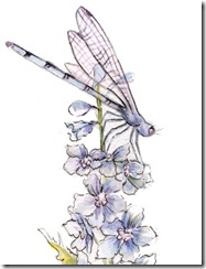 Dragonfly_for_web