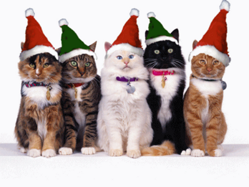 MerryChristmasCats