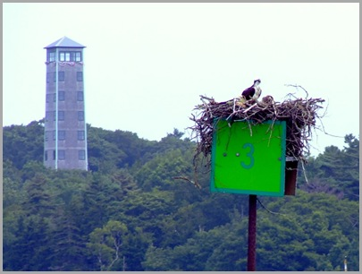 Osprey Nest at Christmas Cove