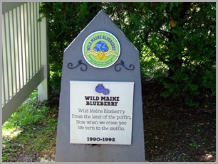 Why Wild Maine Blueberry?  It's The Best Ice Cream Ever!