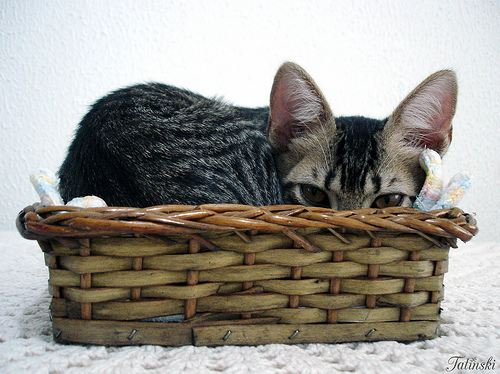 cute rescued cat hiding in basket
