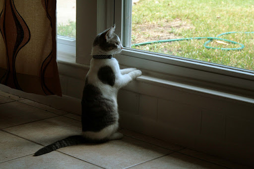cute kitten standing by window watching birds