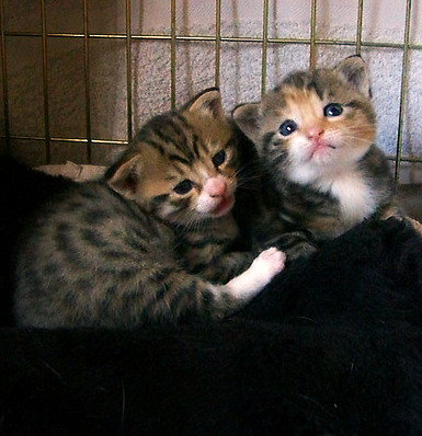 cute rescued foster kittens