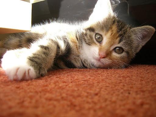 cute rescued kittens