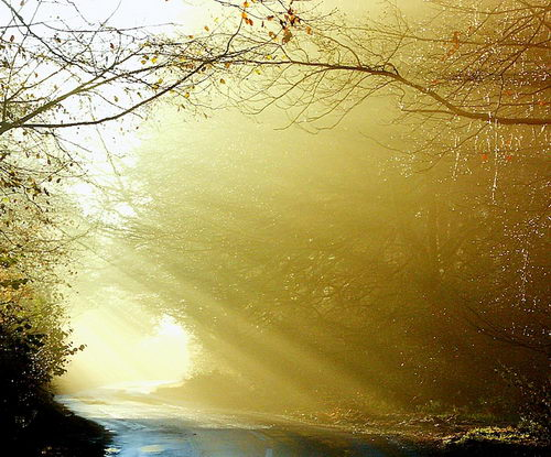 Breathtaking Photos of the Sunbeams Natural Beauty