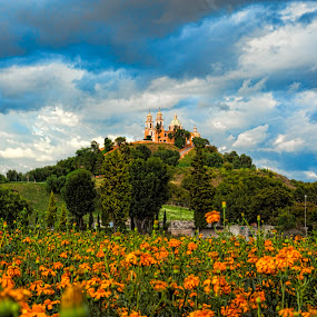 flowers field by Cristobal Garciaferro Rubio - Landscapes Prairies, Meadows & Fields