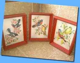 bird pictures 001