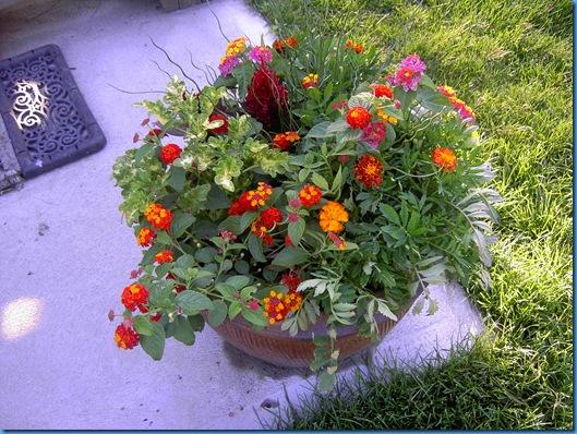 Cukes and garden 015
