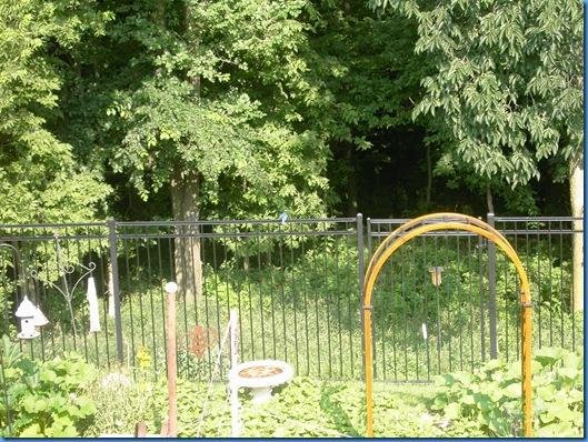 Garden 2009 006