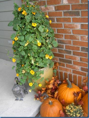 fall 2008 035