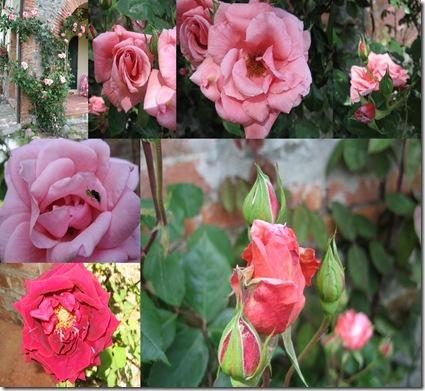 fiori camilli