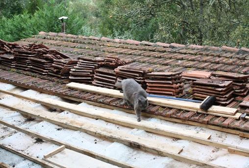 Мист на крыше